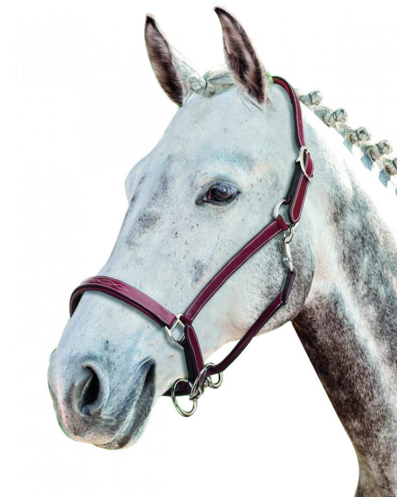 Kantar dla konia skórzany Prestige Italia E53